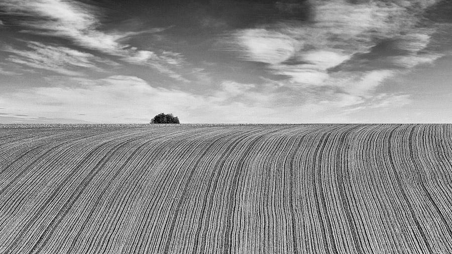 Slavonia fields